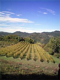 Vigne-dei-Boschi-vigneti-estate